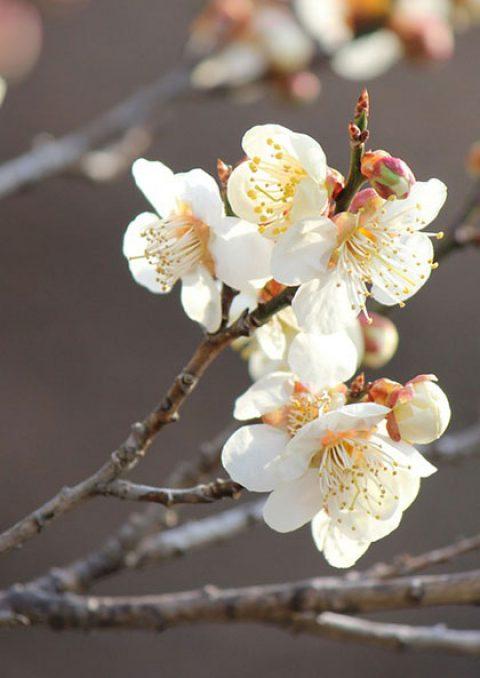 Des cris silencieux… des rires effacés… le drame de Fukushima, se souvenir pour ne jamais oublier…