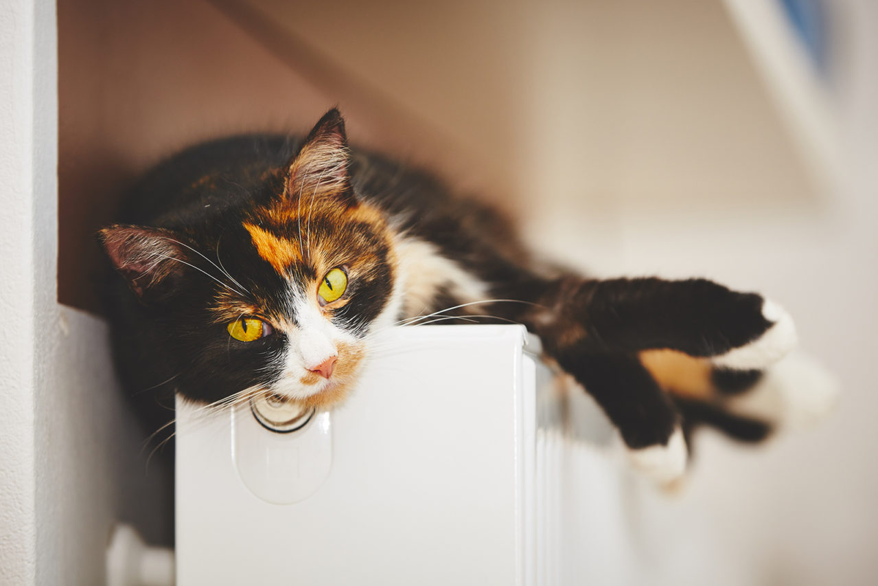 Cat is relaxing on the warm radiator